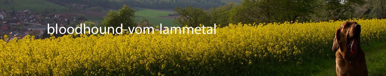banner_vomlammetal.jpg
