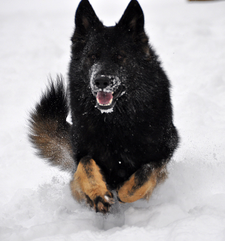 Lobo2Jahre_3.jpg